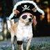 capt-dog_bigger